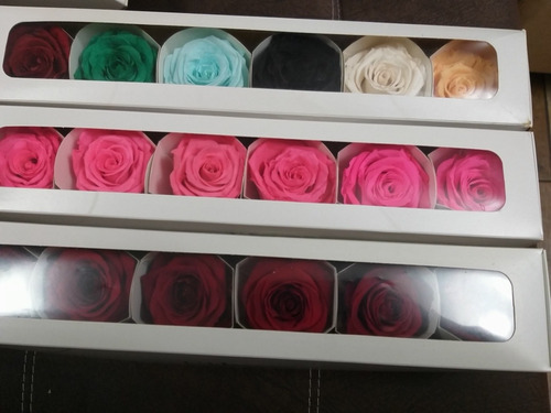 rosas eternas