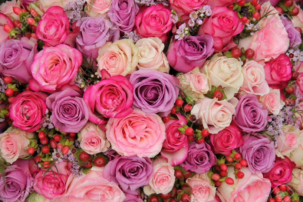 Rosas japonesas bonsai 25 variedades colores semillas100 - Fotos de rosas de colores ...