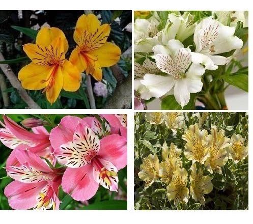 rosas y flores de venta por mayor y menor