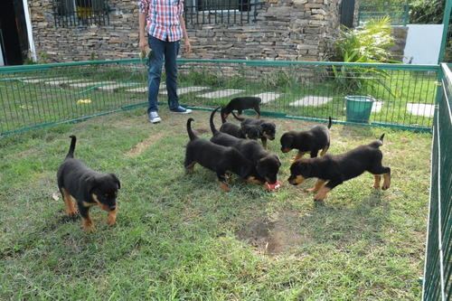 rottweiler ranchlara criadero especializado  lineas adrk
