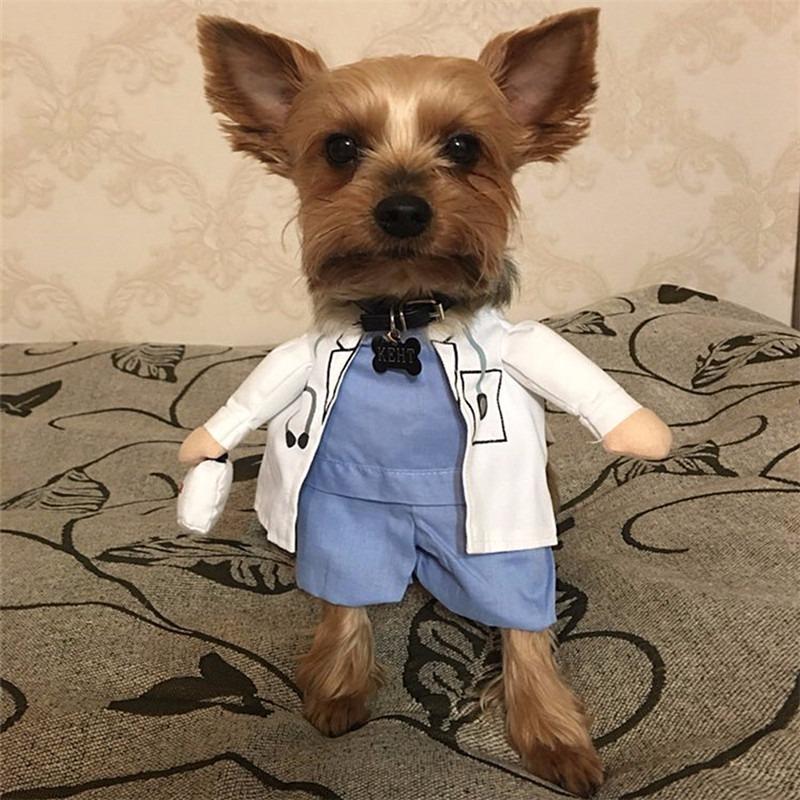 Resultado de imagem para cachorro com roupa