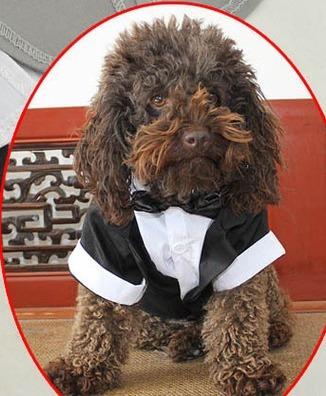 roupa de cachorro ou gato para casamento terno traje social