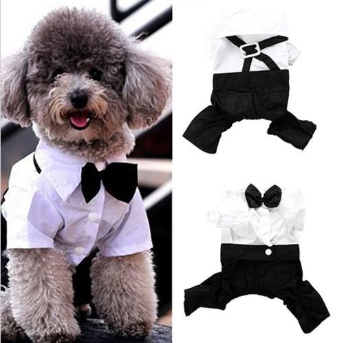 roupa de gala   noivo casamento festa cachorro pet dog