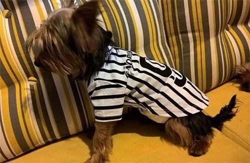 ae44976c2b Roupa Para Cachorro De Time Corinthians Tamanho P - Pet Shop - R  28 ...