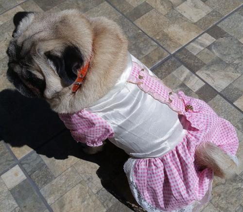 roupa para cachorro/ gato vestido rosa luxuoso traje social
