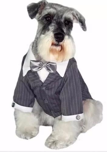 roupa terno para cães e gatos