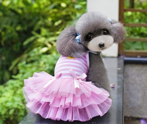 roupa vestido algodão para cachorro saia tule tamanho tutu g
