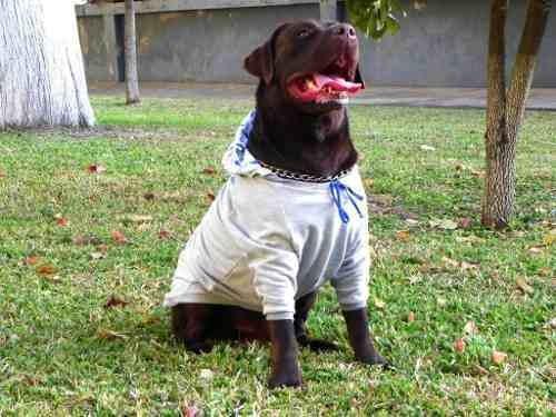 roupinha pra cachorros - pococan moletom