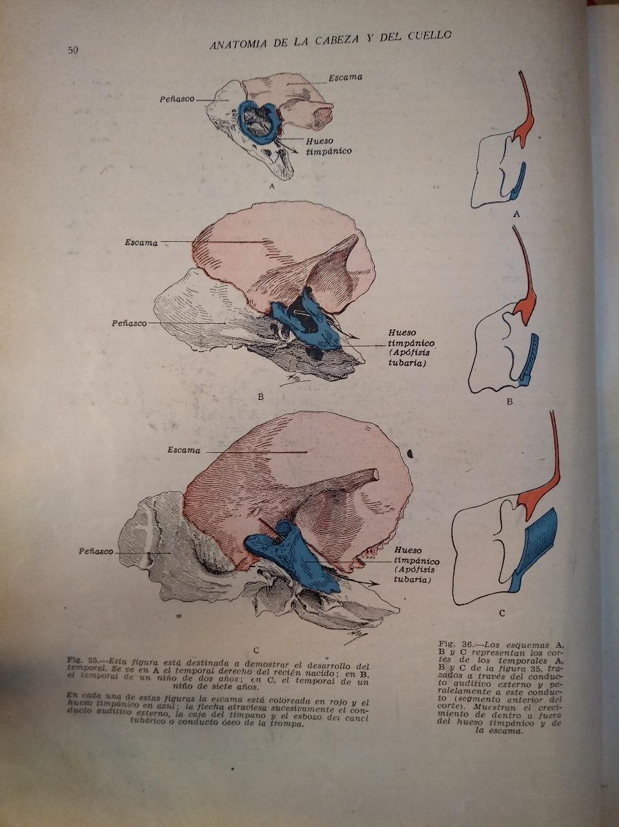 Rouviere - Anatomía Humana. I: Cabeza Y Cuello / 3ª Ed - $ 500,00 en ...