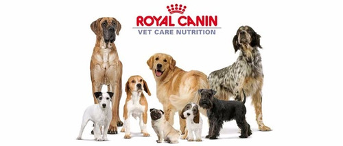 royal canin adulto 15kg