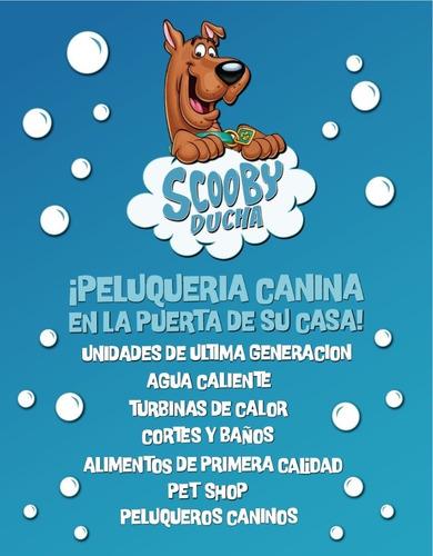 royal canin medium adult 15kg - scooby ducha - envío gratis