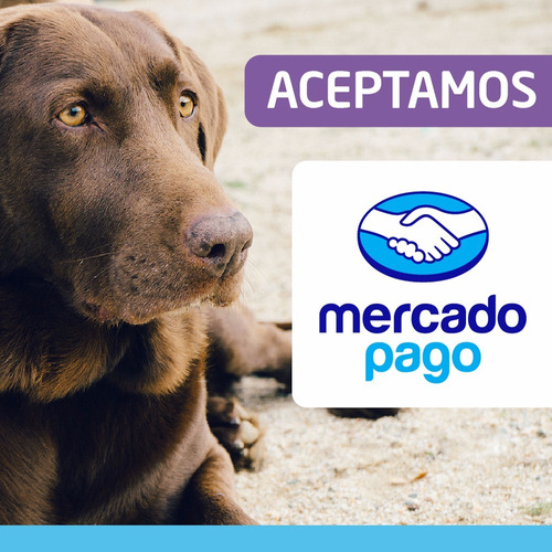 royal canin performance adult 15 kg perros el molino