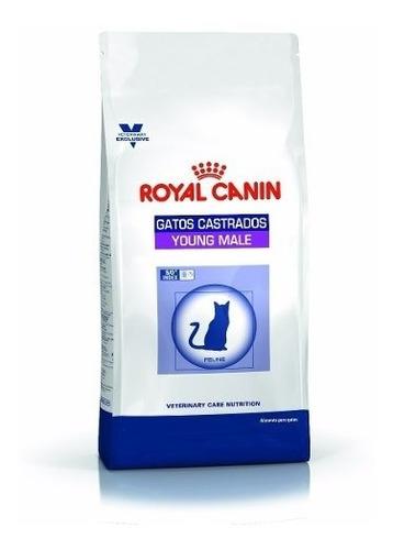 royal canin young male gato 3,5 kg  envío gratis santiago