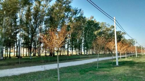 ruta 2 - campo de roca 2  vista al lago ref. 19844