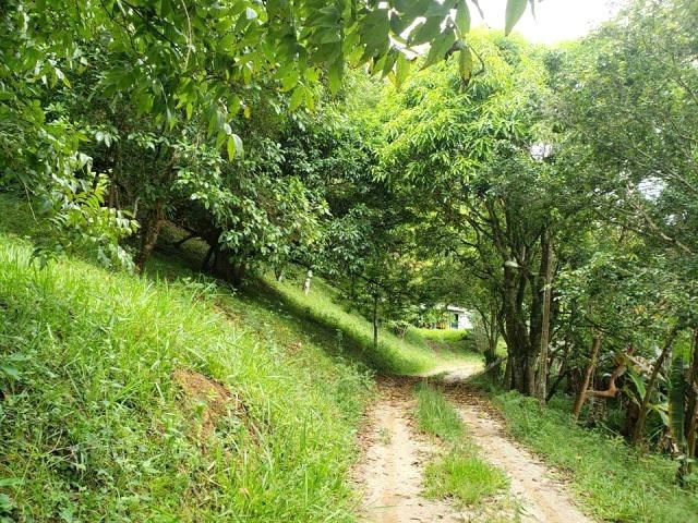 s-4189 sítio com excelente localização e fácil acesso no itapema - guararema - sp - 2264