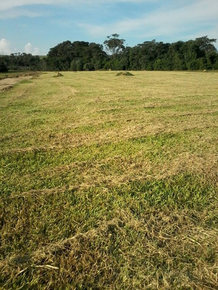 s terrenos 1000 m² 100% plaino, 45 mil.