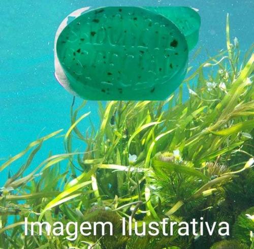 sabonete artesanal: algas marinhas