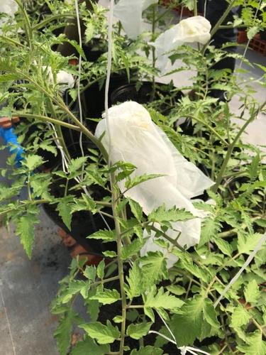 sacos agro tnt c/ elástico18x22cm proteção frutas 100un