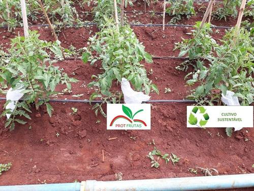 sacos agro tnt c/ elástico25x40cm proteção frutas 50un