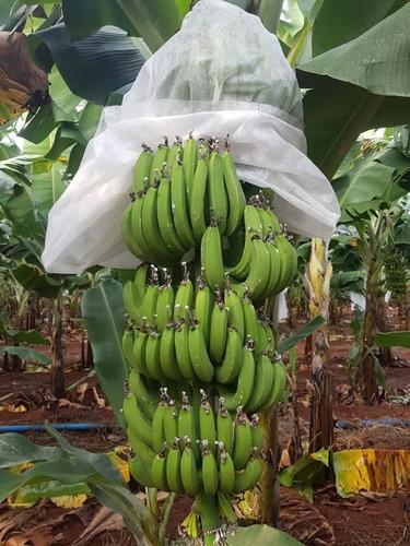 sacos tnt p/ proteção cacho de banana 1,50 x 0,80 cm 100un !