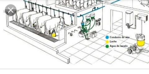 salas de ordeño mecanico.