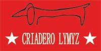 salchicha mini lymyz - hembra arlequin-envios a todo el pais