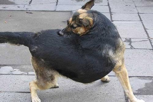 salud y bienestar de tu mascota
