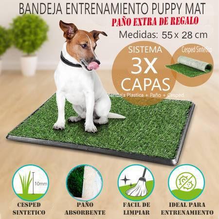 sanitaria mascotas perro