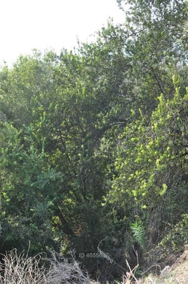 santa olivia con santa margarita