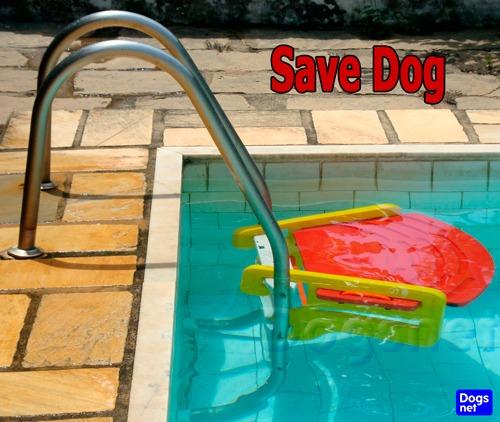 Save dog plataforma de piscina p c es anti afogamento for Plataforma para piscina