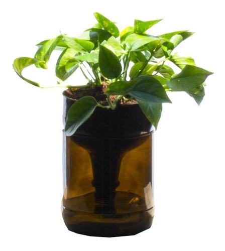 scindapsus little plant 22, maceta autorregante