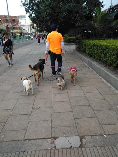 se cuidan y pasean perritos de raza pequeña