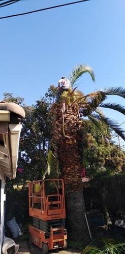 se ofrece servicio de tala o poda arboles, mantencion jardin