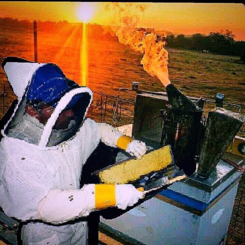 se realizan servicio de rescate de abejas