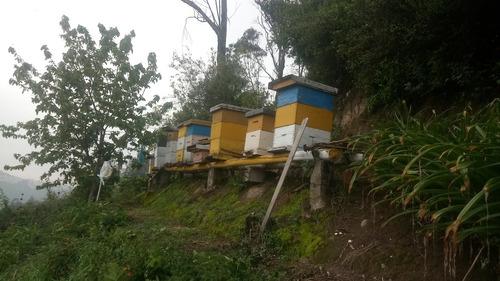 se vende 10 colmenas de abejas valor 300 c/1