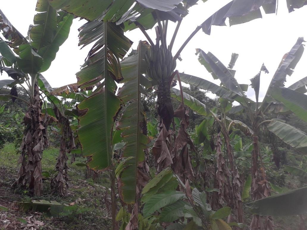 se vende 21 hectáreas de terreno-juanjui