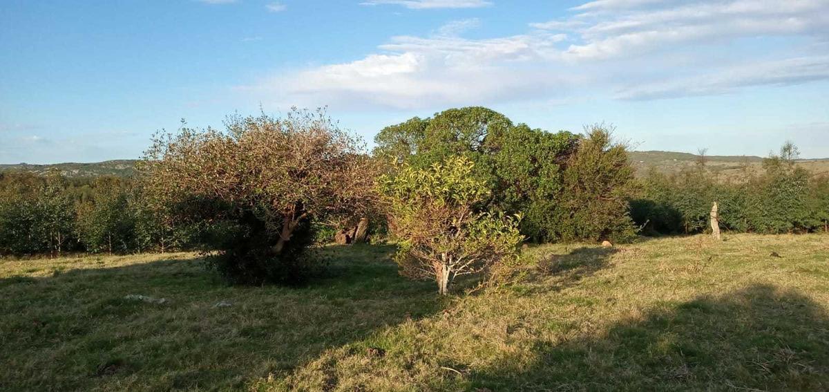 se vende 5 hectáreas por 60.000 u$s
