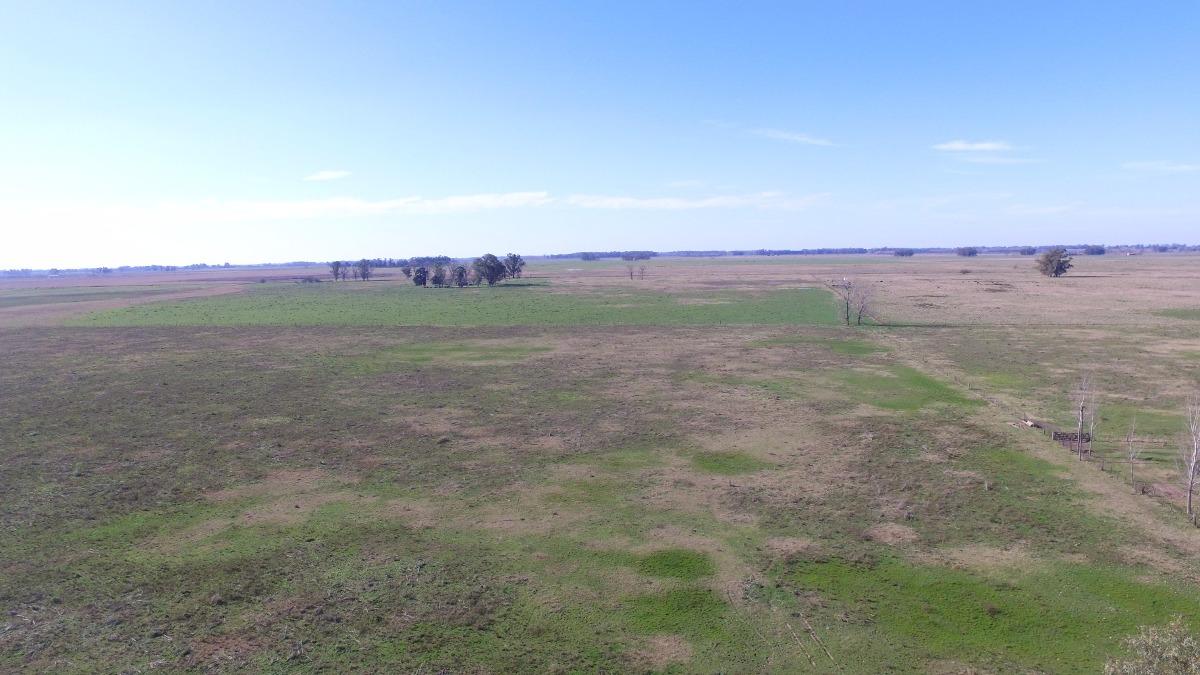 se vende  campo de 48 hectáreas mixto, mercedes (b)