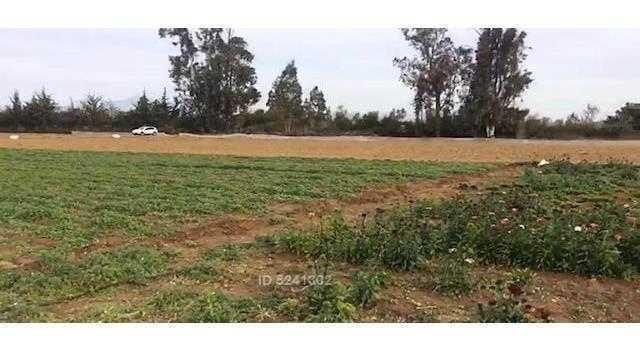 se vende excelente terreno de 7.000 m2 en av. los laureles, limache.