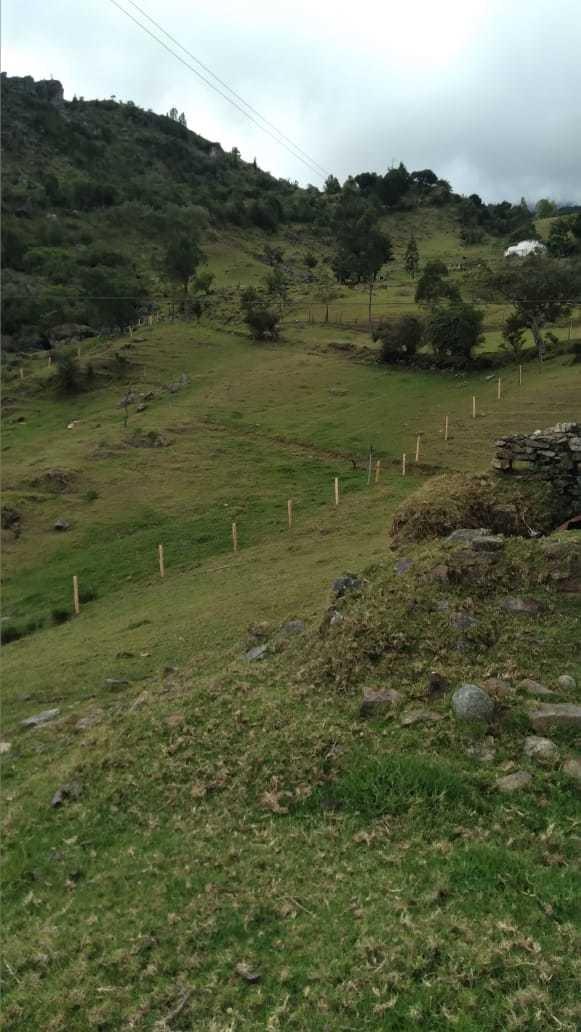 se vendé finca de 8 hectáreas ubicada en tona vereda alizal.