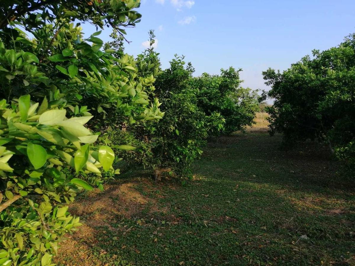 se vende finca en monteria de 216 hectáreas