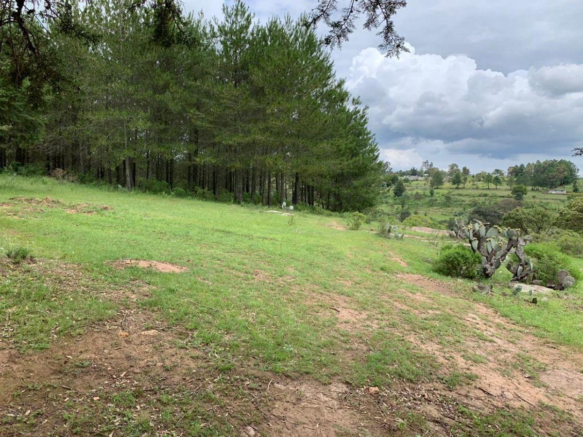se vende hermoso terreno boscoso escriturado en amealco queretaro