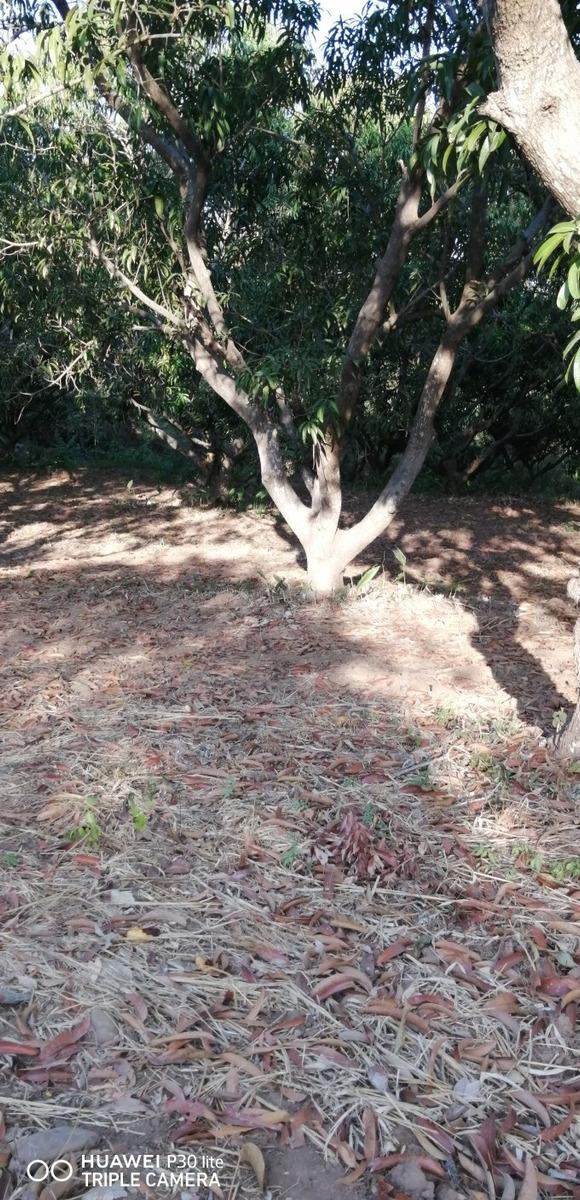 se vende huertas de mango , con árboles en producción.