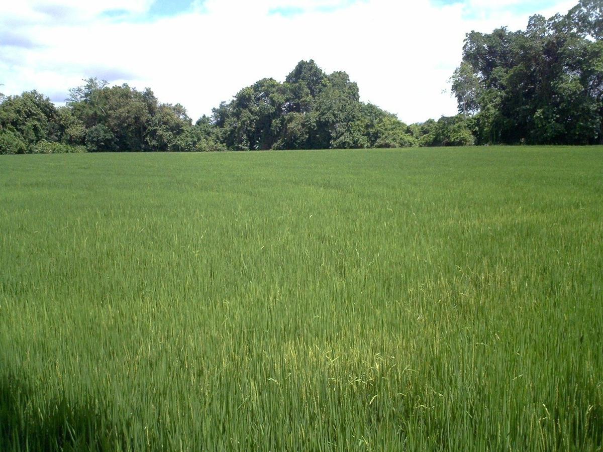 se vende lote de 6 hectáreas para cultivo de arroz