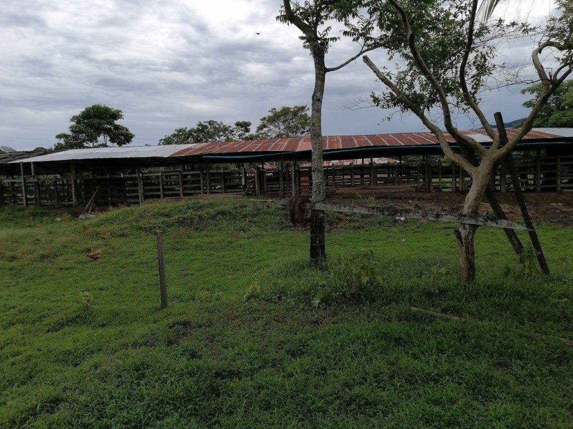 se vende para ganadería o proyecto agrícola