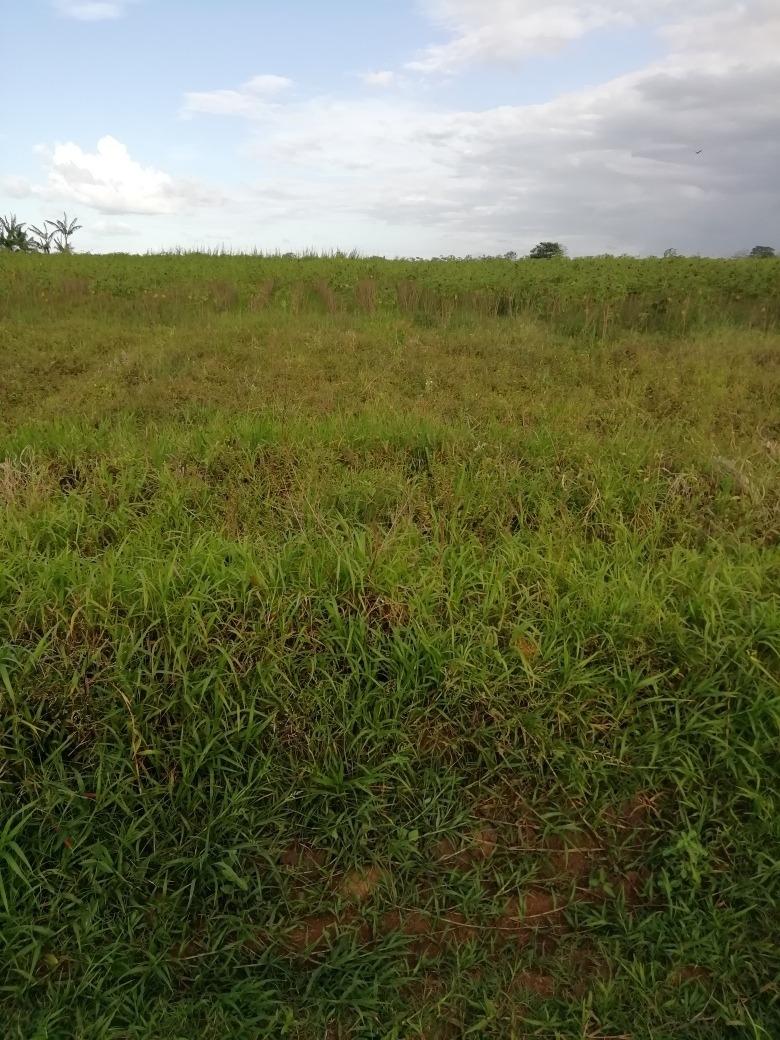 se vende propiedad especial para agricultura.