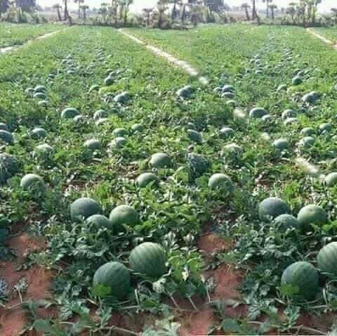 se vende terreno agricola 12hectaria