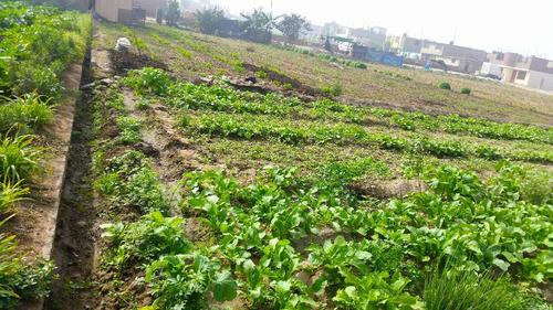 se vende terreno de 1000 m² - carapongo - huachipa