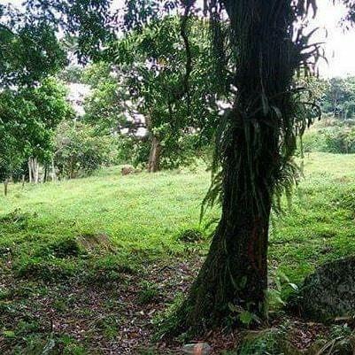 se vende terreno de 8, 4 o 2 hectáreas en acacias meta