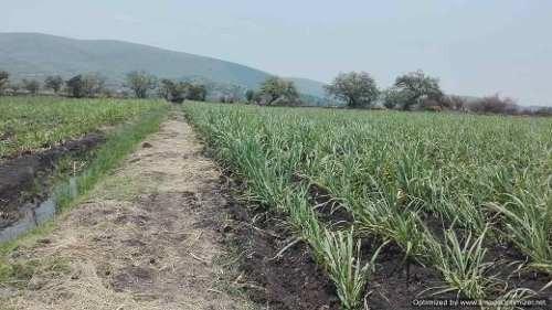 se vende terreno en chiconcuac xochitepec morelos 1 ha $ 1,000 xm2  cl
